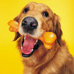 Eeks, It's the Top 10 Things Dogs Eat (Other Than Food)!