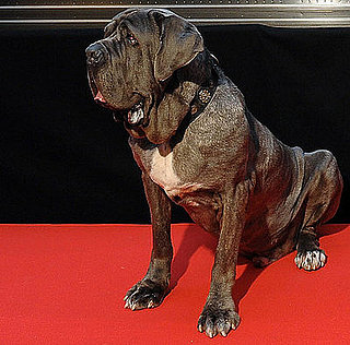 Name This Movie Dog!