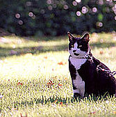 Remembering Socks: Former First Cat Dies