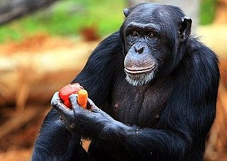 Primates Aren't Pets: House to Keep Chimps Out of Homes