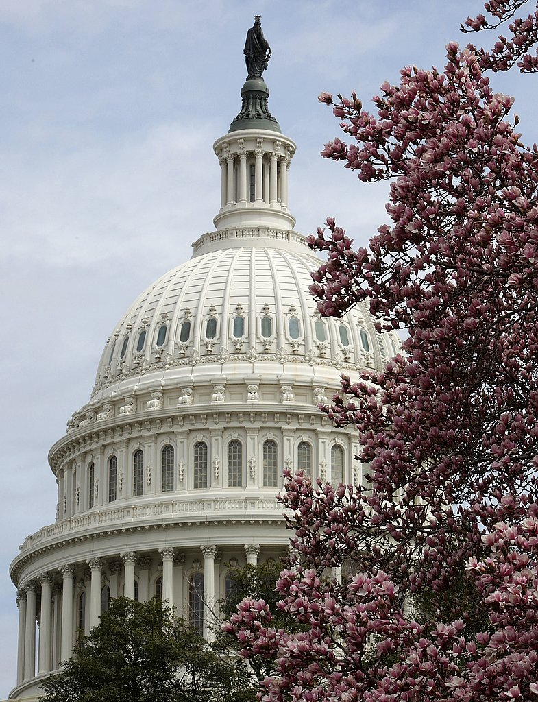 Pictures of Cherry Blossoms Blooming in Washington DC