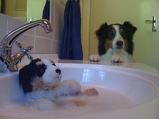 daddy...why is my buddy in the sink?