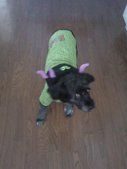 Bonnie on Halloween 2009