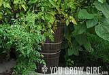 You Can Grow in Containers