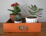 Apartment Therapy suggests framing potted plants with a vintage drawer. So simple!