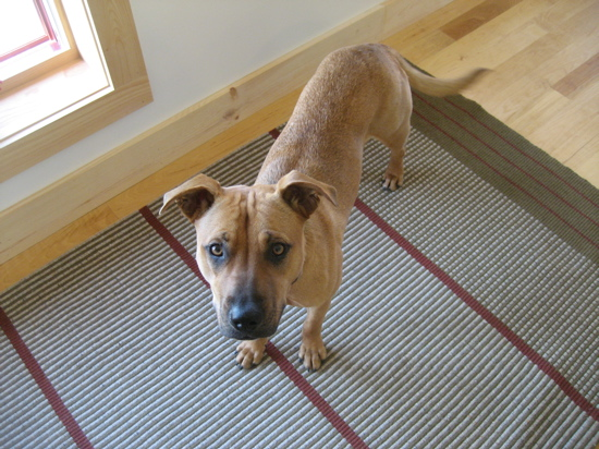 One of the other editors who I met on the trip brought her dog with. The pup's standing on one of the cool, flatwoven rugs made locally in Marshfield, VT, by Beaver Meadow Handwoven Products. I loved the rugs' contemporary designs, including some very Turkish-inspired patterns.