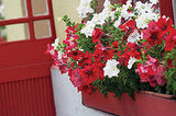 Add Window Boxes ($50)