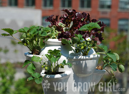 You Grow Girl tips you off on the best ways to grow potted strawberries.