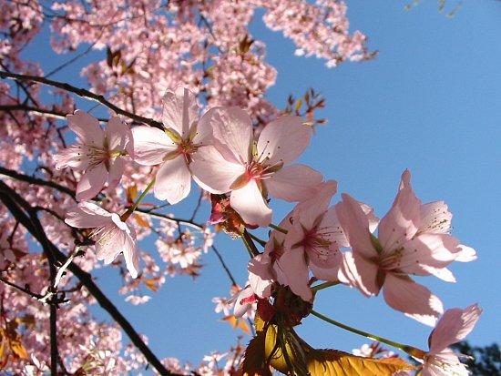 Friday in Spring