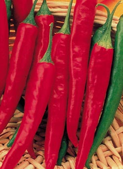 More Than Hot:  The Benefits of Cayenne