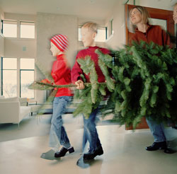 Get Physical: Cut Your Own Christmas Tree