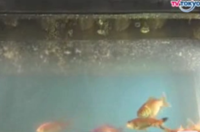 Goldfish Tank + Deep Fryer = Only In Japan