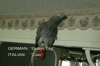 "Parrot Says ""Hello"" In 16 Languages"