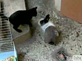 Cat Finally Meets His Match