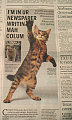 Cute Alert: Cat In The Newspaper