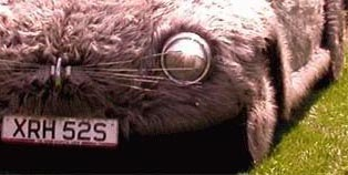 Cute Alert: Bunny Car