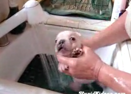 Cute Alert: Pup Takes a Bath