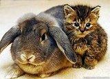 RabbitKit1NSPA_468x336