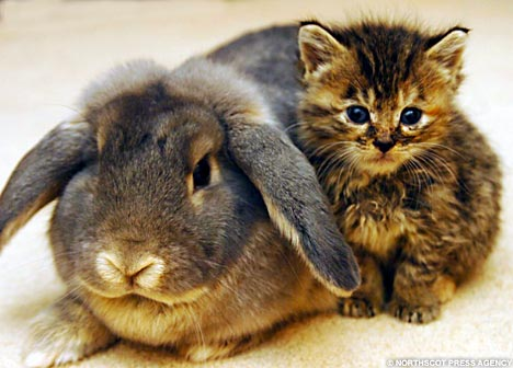 Interspecies Lovin': Rabbit Cares For Kittens