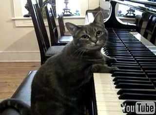 Nora the Piano Playing Cat: An Encore