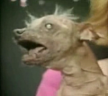 &quot;The World&#039;s Ugliest Dog&quot; Caught On Tape!