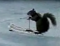 A Water Skiing Squirrel? That's Nuts!