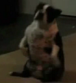 Dog Sits 'N Spins