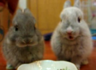 Cute Alert: Nibbling Bunnies