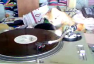 DJ Kitty In Da House!