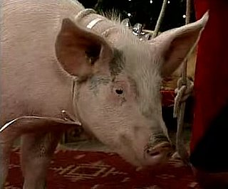 Pig Potty Blooper on Mad TV Christmas Sketch