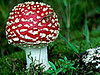 Tech News - A Real Super Mario Mushroom Found