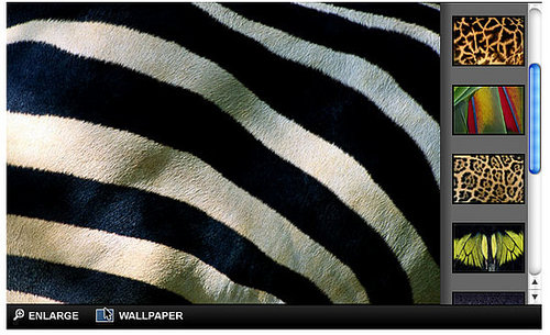 Beautify Your Desktop With National Geographic Wallpapers