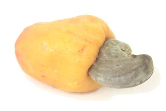 Exotic Fruit of the Day