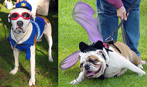 Is it Halloween Costume Time for Your Pet?