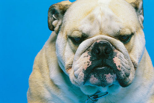 The Scoop: Slentrol, a Weight-Loss Drug for Dogs