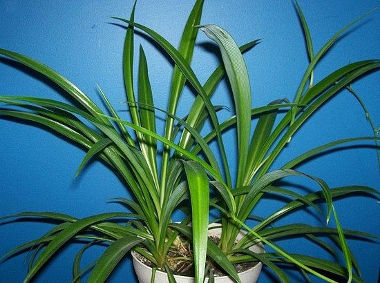 Name This Houseplant