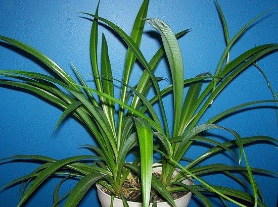 Name This Houseplant