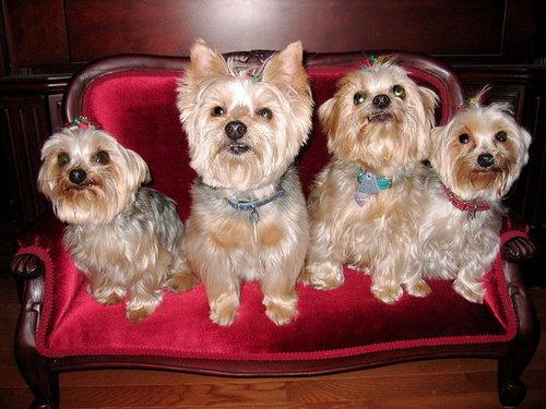 My Little Four-Legged Children