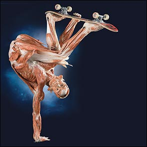 Body Worlds:  Made For and From Real People